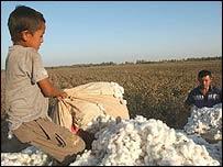 kids picking cotton